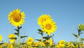 summer-1023065_960_720